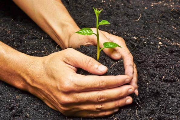 Plant Yourself in Good Soil